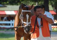 Racing Horse at Saratoga Springs, NY