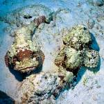 """Scorpionfish Ballet"" by JoaoPonces"