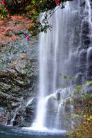The Camelias And The Waterfall