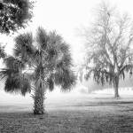 """Winter Palmetto"" by Hansen"