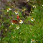 """""""Butterfly DSC_0192"""" by TalProFitPhotography"""