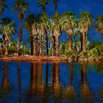 """""""Palm Trees On The Water"""" by Kirtdtisdale"""
