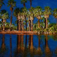 Palm Trees On The Water Art Prints & Posters by Kirt Tisdale