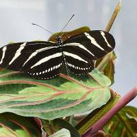 Black Butterfly Art Prints & Posters by Steve Ondrus
