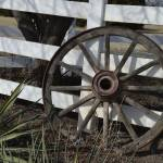 """""""Wagon Wheel DSC_0403 (2)"""" by TaylorMadeArt.US"""