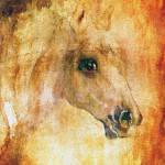 """Horses Strong and Gentle Percheron Portrait"" by GinetteCallaway"
