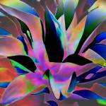 """Aloe"" by winrow"