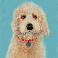 Cream Labradoodle Art Prints & Posters by Yvonne Carter