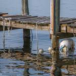 """Dock and Buoys -"" by jkphotos"