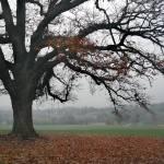 """Tree on Hill"" by GordonBeck"
