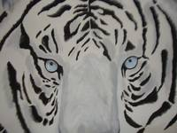 White Bengal Tiger Portrait