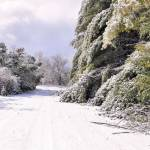 """""""East Tennessee winter"""" by KCampbell"""