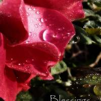Blessings Art Prints & Posters by H. Blair Howell
