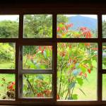 """2016-02-10 Poinsettia Bush Through a Window"" by rhamm"