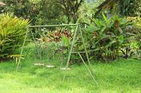 Swing Set and Tropical Plants