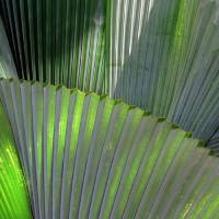 Palm Fronds Art Prints & Posters by Joel Carlson
