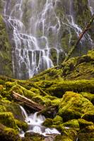 Proxy Falls Oregon 8