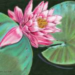 """Water Lilly"" by LauraLeeArt"