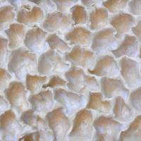 1. Beige and White Coral-Texture Abstract