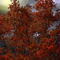 The Passion of Autumn Art Prints & Posters by RC deWinter