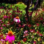 """""""Purple Flowers"""" by Appleofmyeye"""