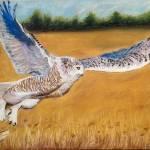 """""""Owl in flight"""" by Appleofmyeye"""