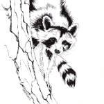 """RaccoonBW"" by jasonfowler"