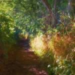 """""""Light And Dark On The Path"""" by johngrovesart"""