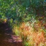 """""""Red Berries Beside The Path"""" by johngrovesart"""