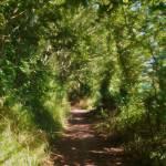 """""""Summer Walking"""" by johngrovesart"""