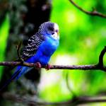 """""""Blue canary"""" by DanSteeves"""