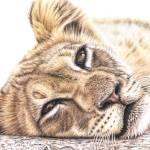 """""""Lion Cub"""" by ArtsandDogs"""