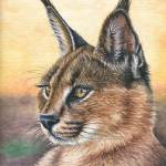 """Caracal Sunset"" by ArtsandDogs"