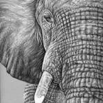 """African Elephant"" by ArtsandDogs"