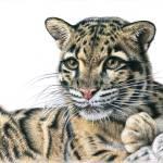 """""""Nebelparder - Clouded Leopard"""" by ArtsandDogs"""