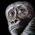 """Gorilla"" by ArtsandDogs"