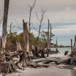 """Stumps and Drifwood"" by jkphotos"