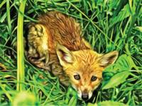 Fox in Grass 1