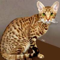 Ocicat Art Prints & Posters by Marian Cates