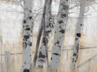 Aspens Study by Leslie Harlow