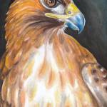 """Red Tail Hawk"" by artdeep"