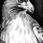 """Red Tail Hawk BW"" by artdeep"