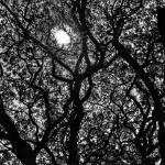 """SUN BEYOND THE TREE"" by nawfalnur"