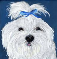 Maltese in Blue Bow