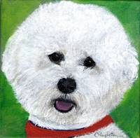 Happy Bichon