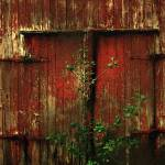 """Beautiful Decay"" by RCdeWinter"