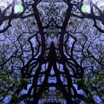 """""""ABSTRACT TREES #1, 22 FEBRUARY 2016"""" by nawfalnur"""