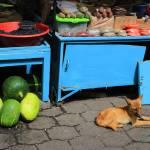 """Dog in an Outdoor Market"" by rhamm"