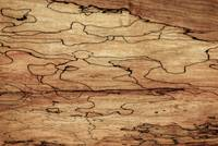 Sugar Maple Spalted Wood Grain Pattern-Nature Abst