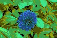 Blue center Flower